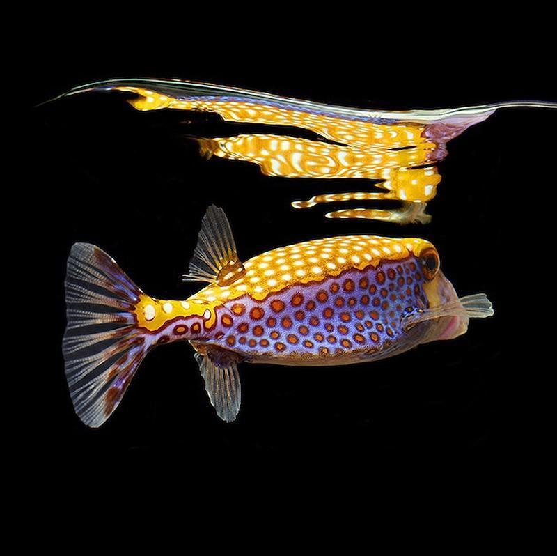 underwater021 Неоновые портреты экзотических морских обитателей
