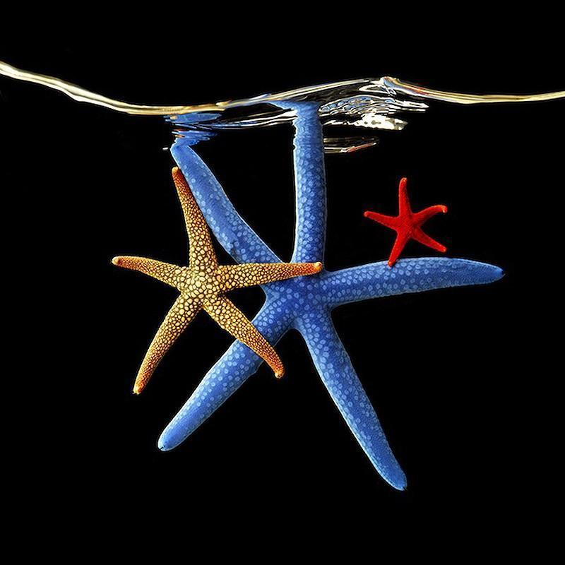 underwater031 Неоновые портреты экзотических морских обитателей