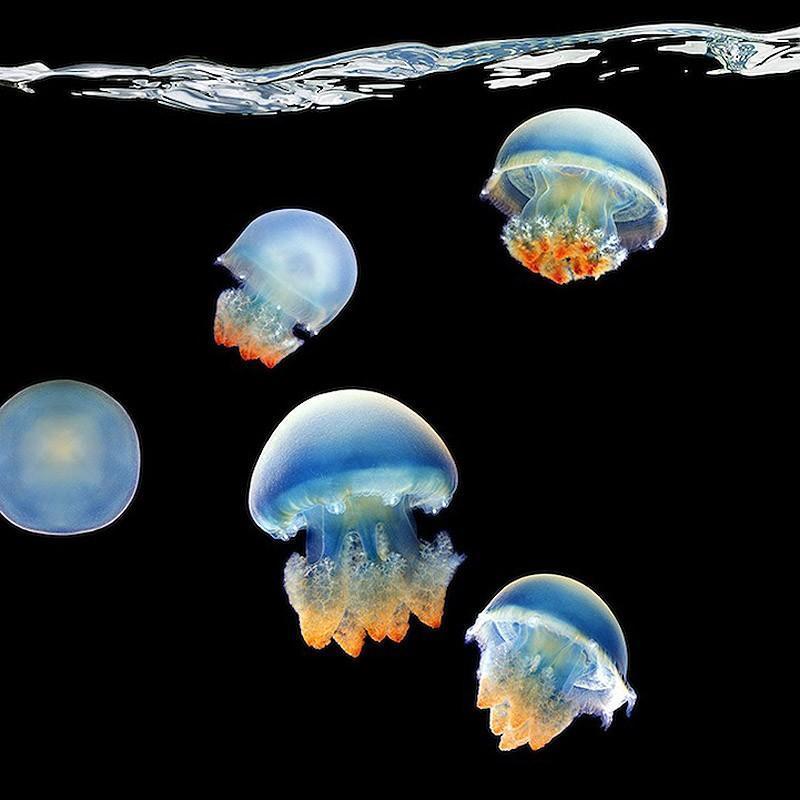 underwater071 Неоновые портреты экзотических морских обитателей