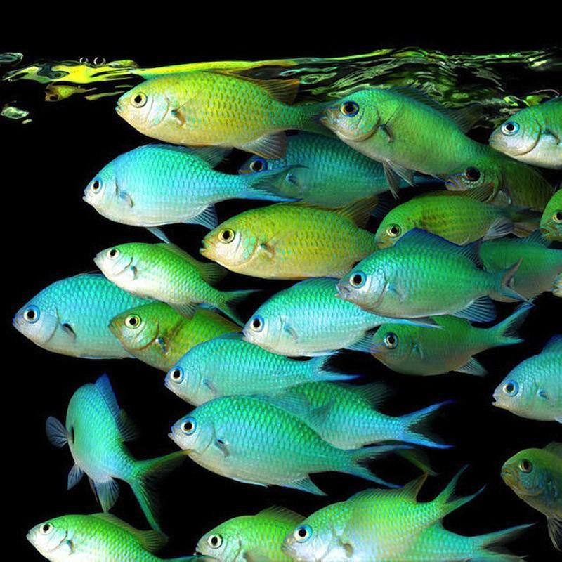 underwater081 Неоновые портреты экзотических морских обитателей