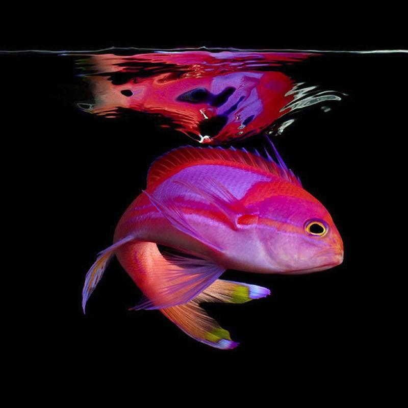 underwater091 Неоновые портреты экзотических морских обитателей