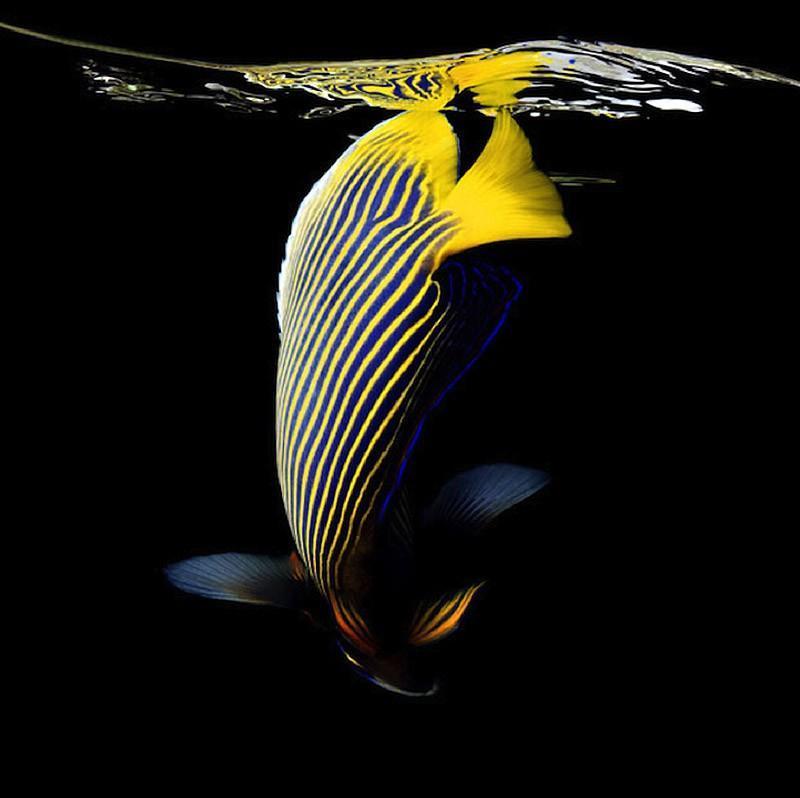 underwater101 Неоновые портреты экзотических морских обитателей