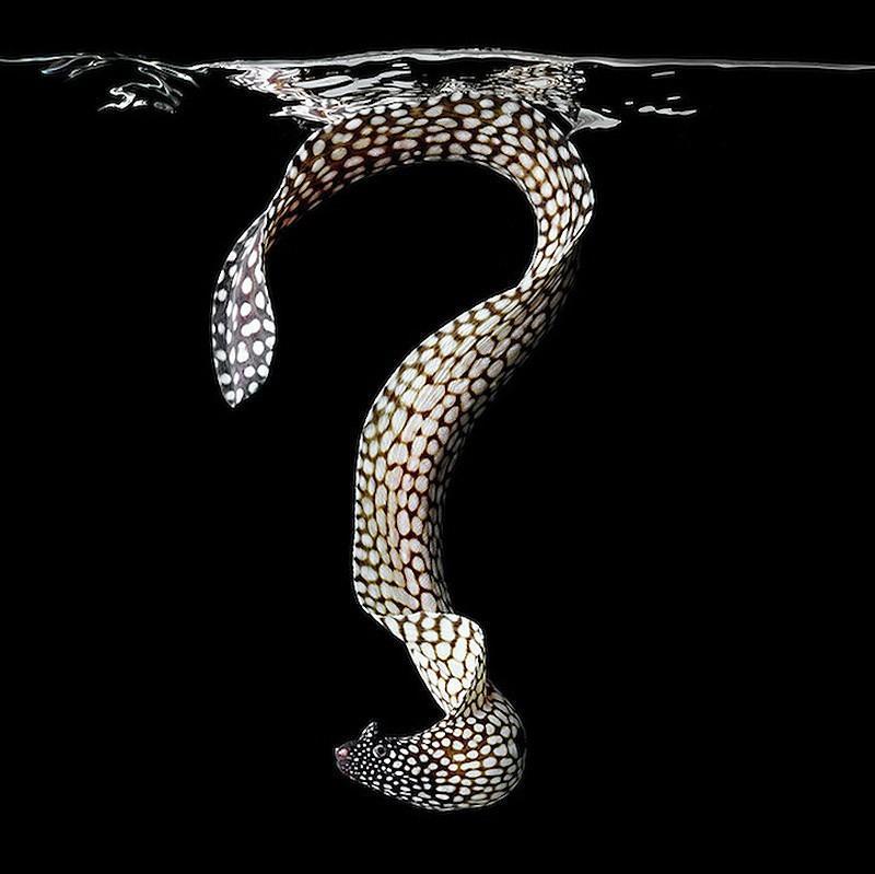 underwater13 Неоновые портреты экзотических морских обитателей