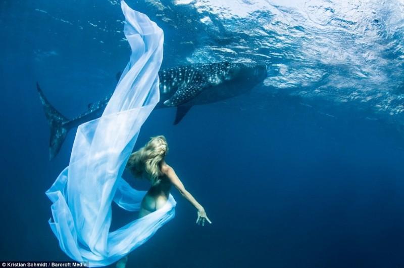 Подводная фотосессия с китовыми акулами