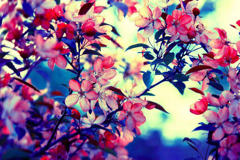 Цветы барбары флорчик • новости в