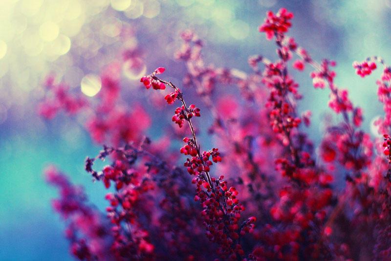 Ae3da цветы барбары флорчик