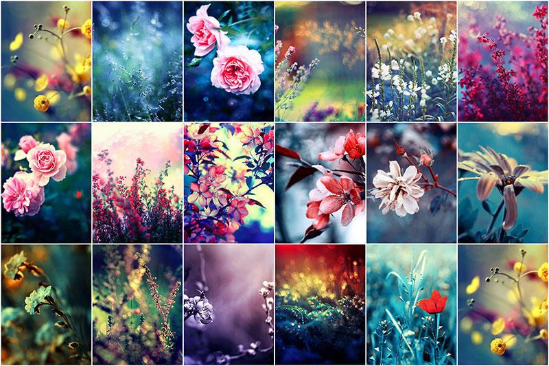 BIGPIC13 Цветы Барбары Флорчик