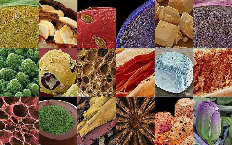 BIGPIC33 Удивительные кадры: завтрак под микроскопом
