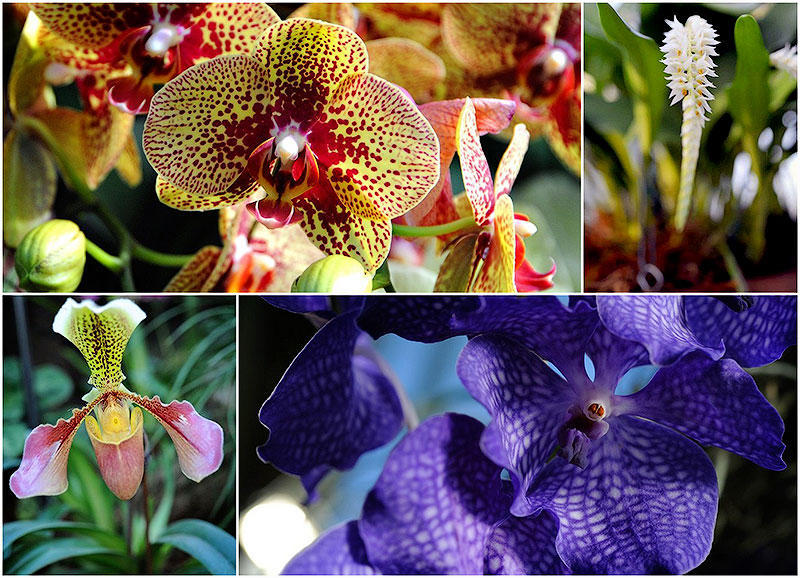 Экзотические орхидеи