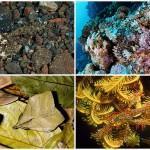 Животный камуфляж: мимикрия под окружающую среду