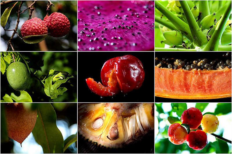 Необычные плоды деревьев - подборка фото