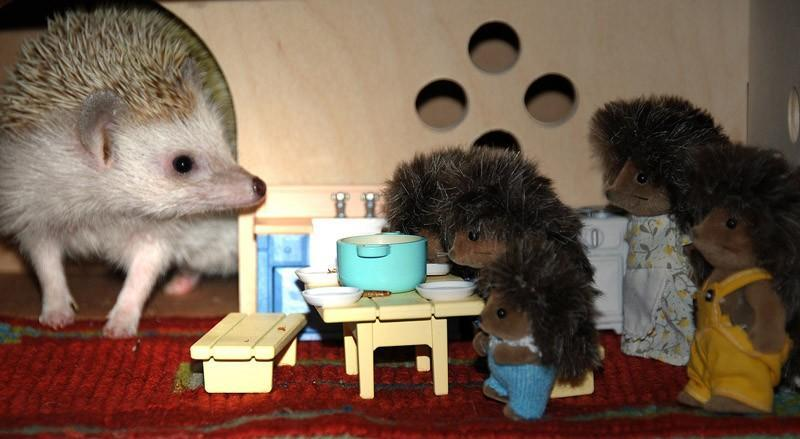 Hedgehogs06 Ёжики настоящие и нет