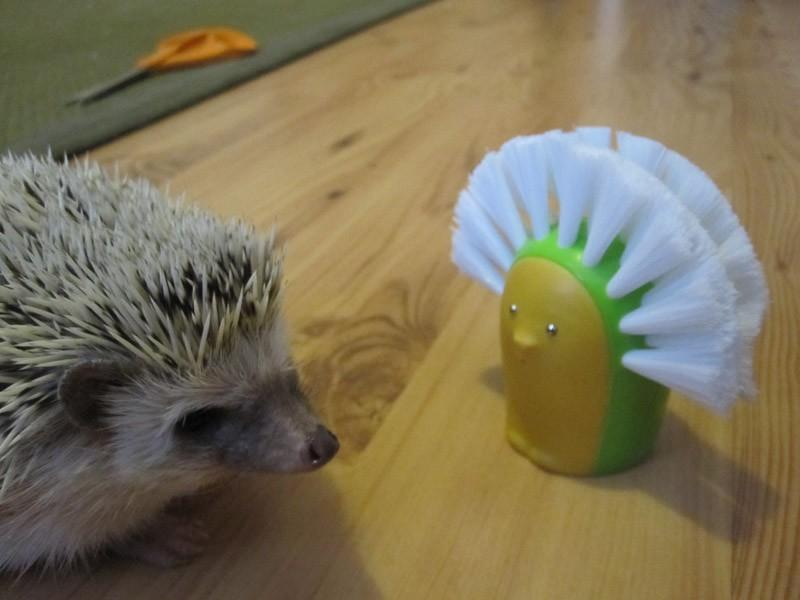 Hedgehogs12 Ёжики настоящие и нет