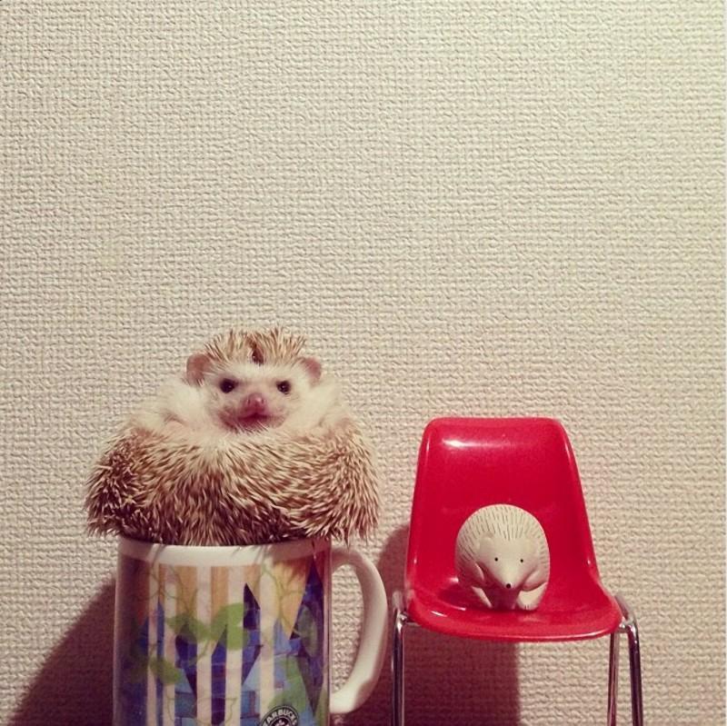 Hedgehogs14 Ёжики настоящие и нет