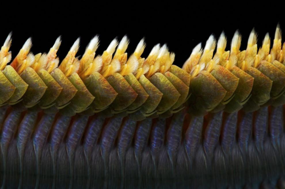 Semyonov04 Морские организмы на фотографиях Александра Семёнова