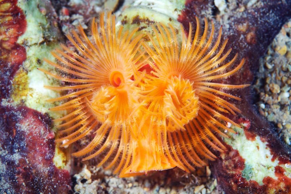 Semyonov26 Морские организмы на фотографиях Александра Семёнова