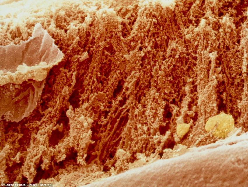 breakfast06 18 удивительных фото продуктов под микроскопом