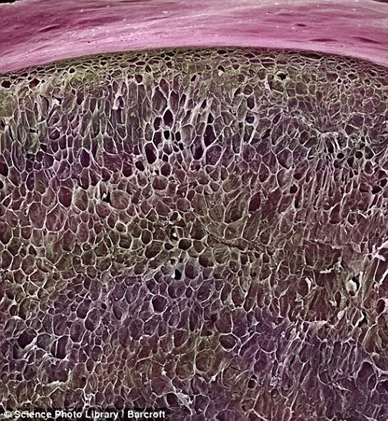 breakfast16 18 удивительных фото продуктов под микроскопом