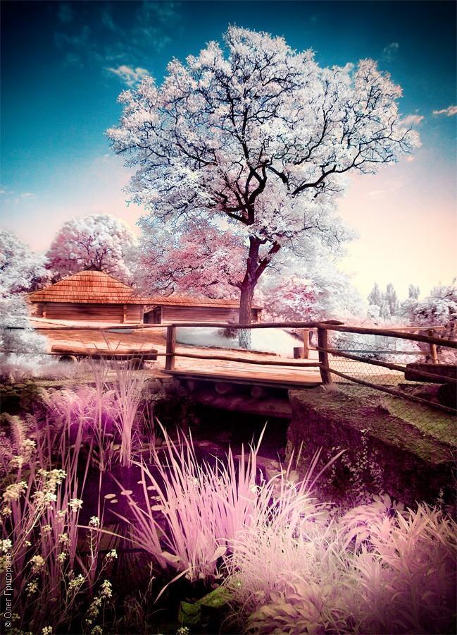 infrared09 Инфракрасная фотография от Олега Григорьева