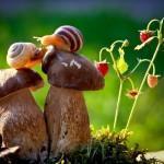 Сказка природы от Вячеслава Мищенко