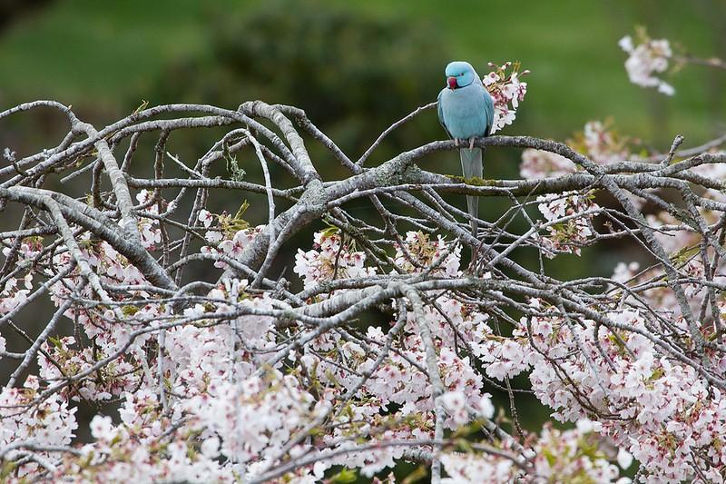 mapleglen02 Восхитительный сад Maple Glen в Новой Зеландии