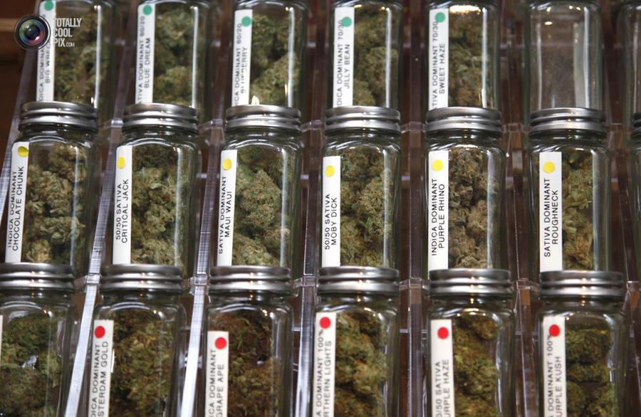 marijuana09 Марихуана в США