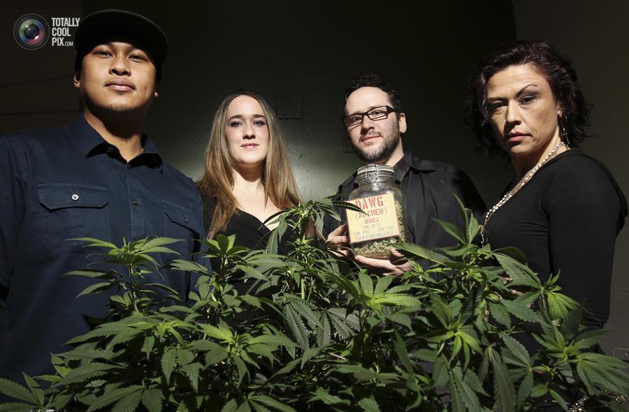 marijuana14 Марихуана в США