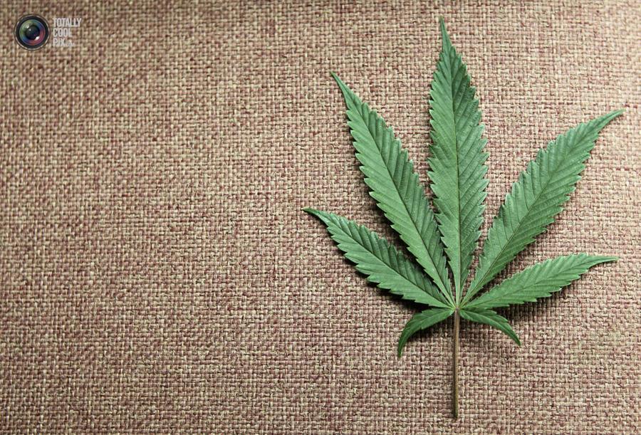 marijuana17 Марихуана в США