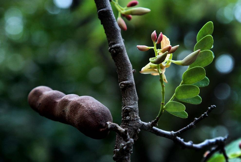 neobichniefrukti 3 Топ 10 самых необычных фруктов