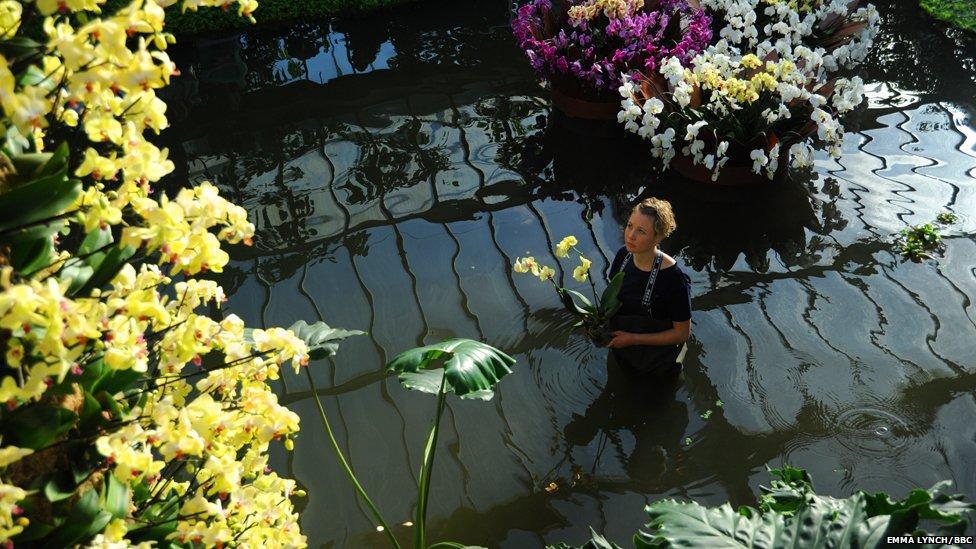 orchids01 Экзотические орхидеи