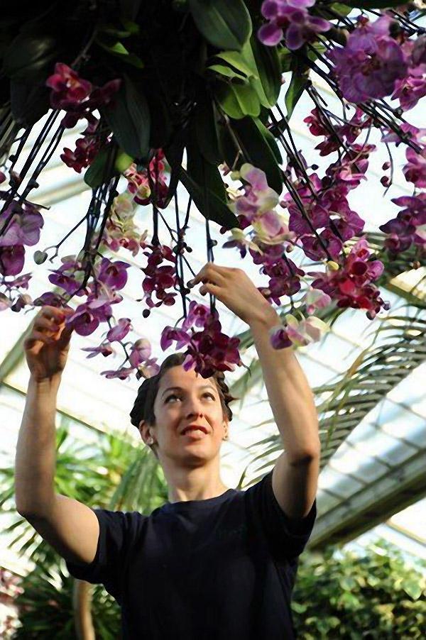 orchids06 Экзотические орхидеи