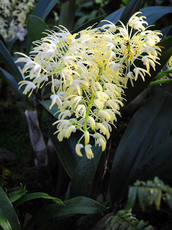 orchids09 Экзотические орхидеи