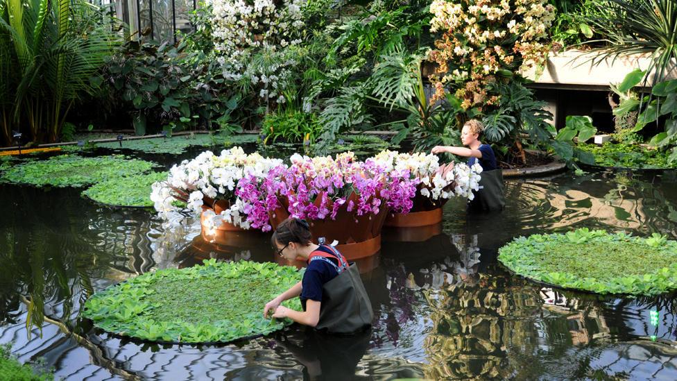 orchids12 Экзотические орхидеи