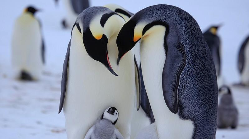 Частная жизнь пингвинов