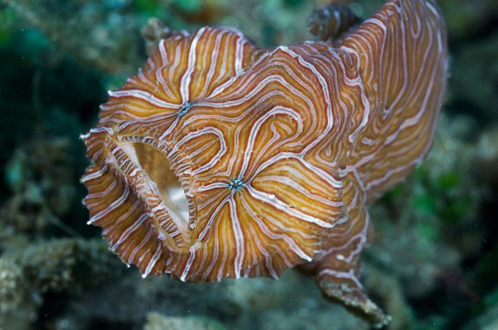 prichudlivieribi 2 Топ 10 самых причудливых рыб мирового океана