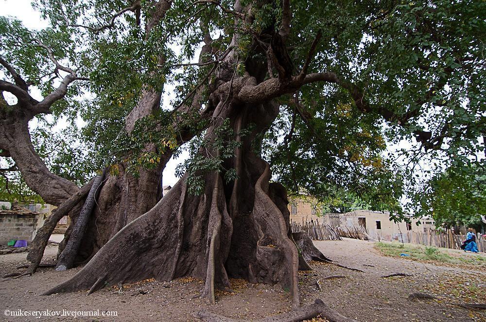 senegal14 Деревня Мар Лодж и Сенегальская школа