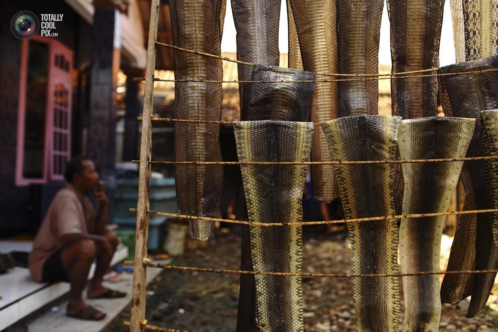 snakeskin01 Как изготавливаются сумки из змеиной кожи