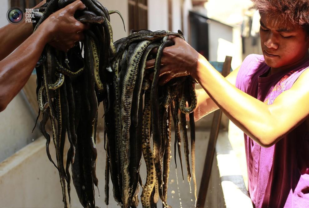 snakeskin02 Как изготавливаются сумки из змеиной кожи