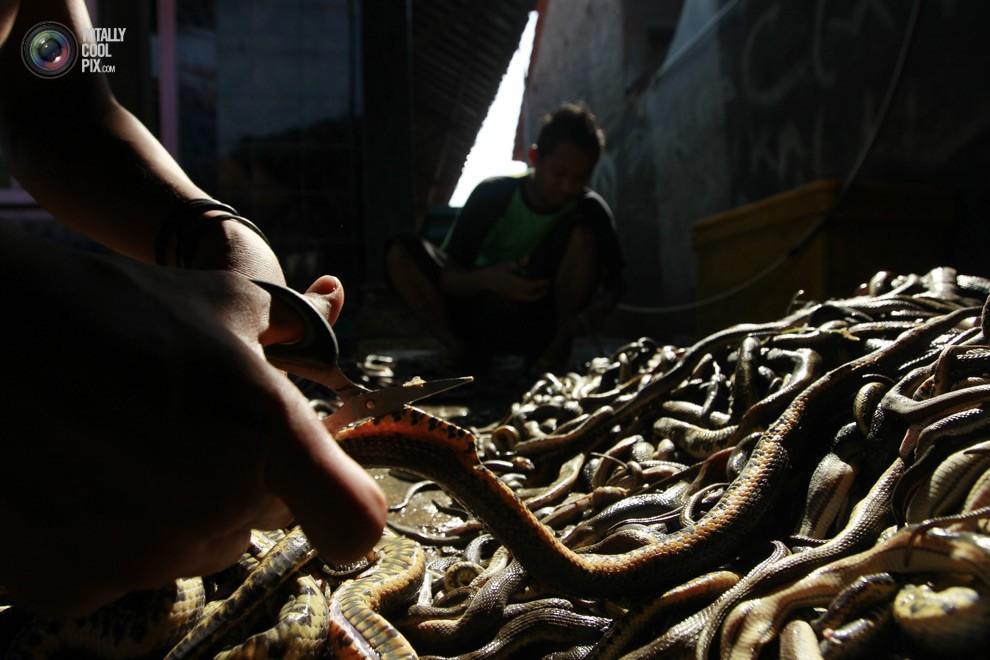 snakeskin03 Как изготавливаются сумки из змеиной кожи