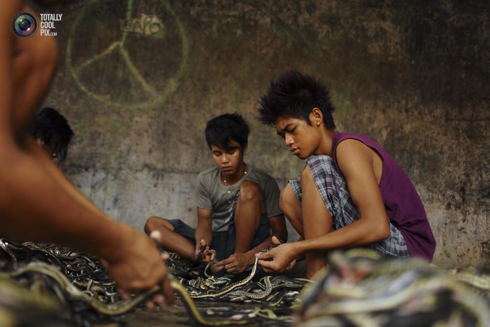snakeskin07 Как изготавливаются сумки из змеиной кожи