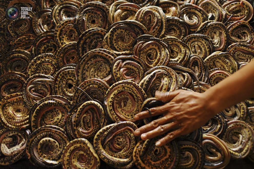 snakeskin09 Как изготавливаются сумки из змеиной кожи