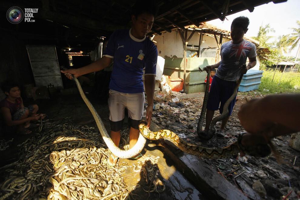 snakeskin14 Как изготавливаются сумки из змеиной кожи