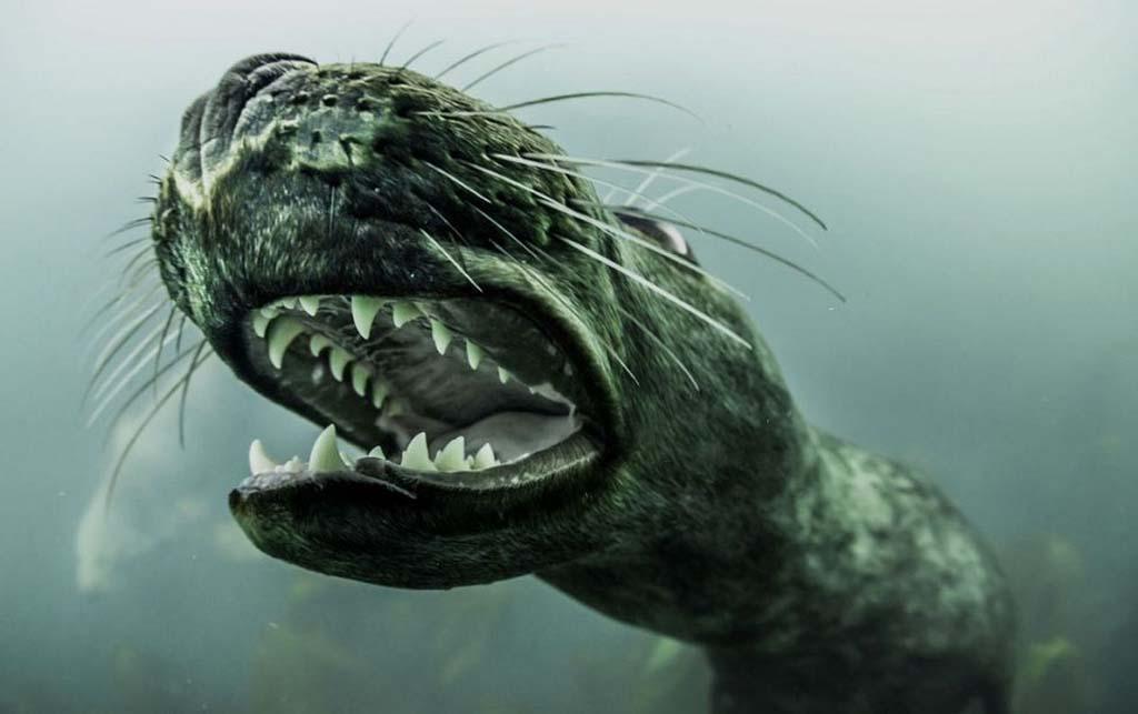 tyuleni 1 Тюлени в фотографиях Адама Хэнлона