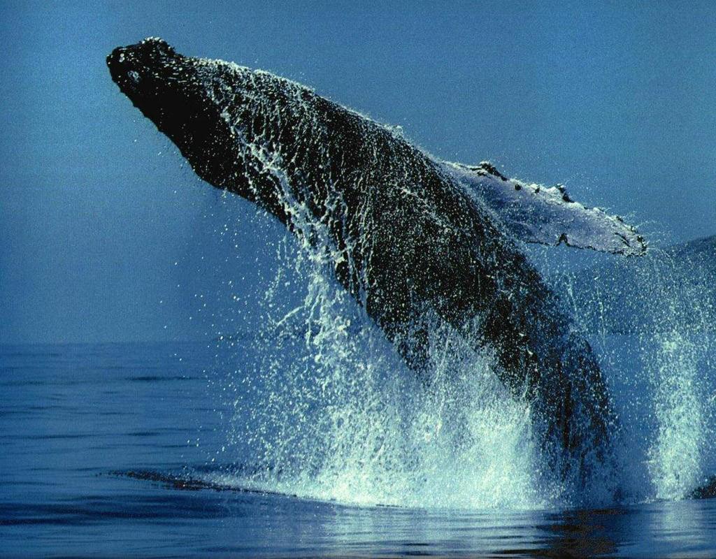 Наблюдать за китом с берега... via: trasyy.livejournal.com.