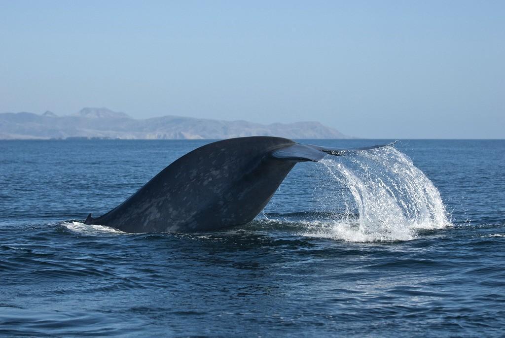 Как интересно наблюдать за этим гигантским животным, находясь всего лишь в...