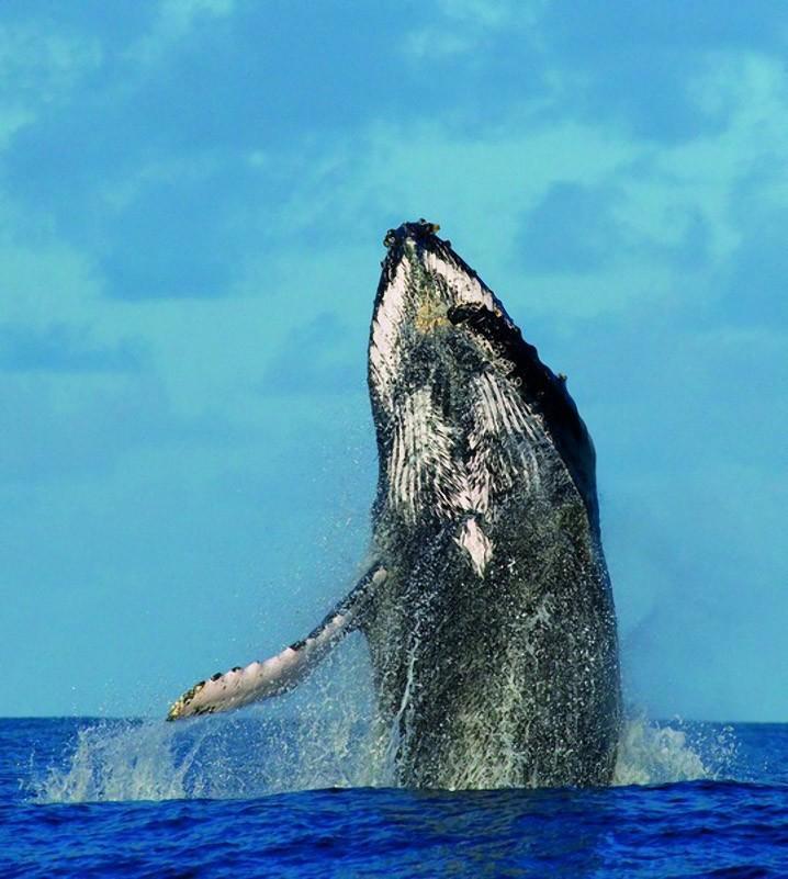 Наблюдать за китом с берега и находиться в море на маленьком катере в...
