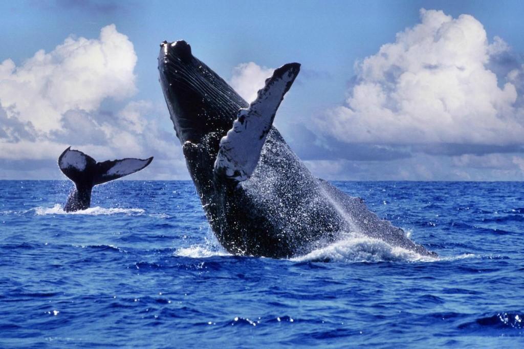 Наблюдать за китом с берега.