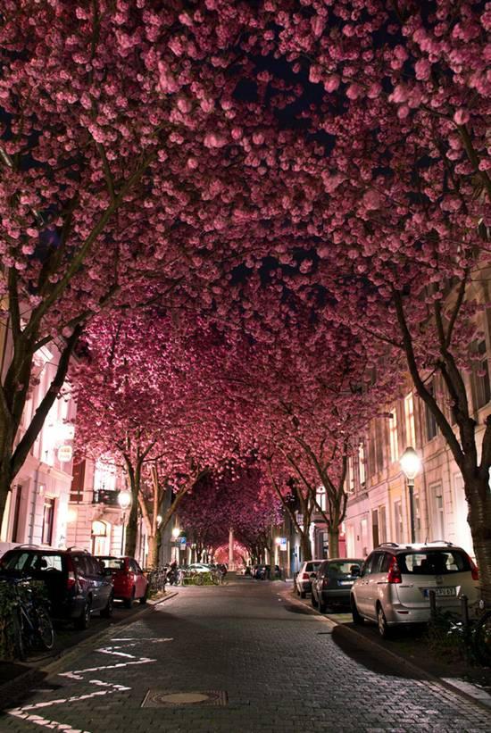 015 10 самых красивых тоннелей из деревьев в мире