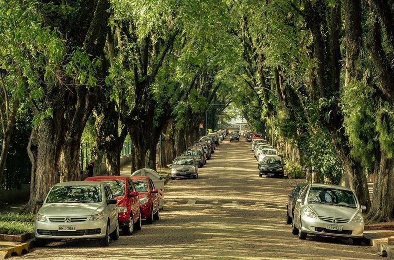 025 10 самых красивых тоннелей из деревьев в мире