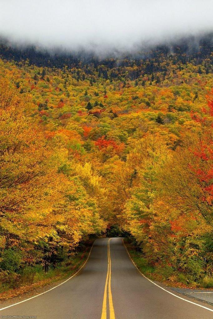 035 10 самых красивых тоннелей из деревьев в мире